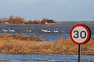 Floods of  6 12 2013 due to tidal surge, showing flooded hides and Mute Swans, Cygnus olor, Cley next the sea,  Norfolk UK