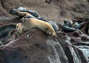 Sea Lions, La Paz, Mexico