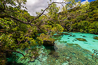 Natural Aquarium, Island of Mare, Loyalty Islands, New Caledonia