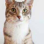20130516 Karen Cats