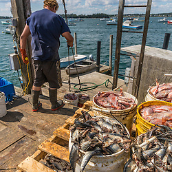 Gary Emerson, loads bait onto a lobster boat at Great Wass Lobster in Beals, Maine.