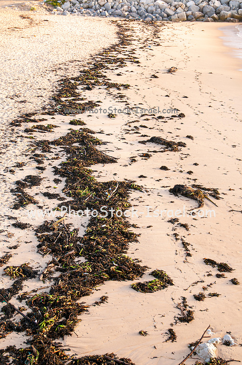 Seaweed on the Atlantic Ocean shore at low tide. Photographed at Figueira da Foz, Portugal