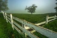 Field of Dawn