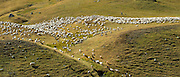 Mountain sheep and goats with shepherd in Val de Tena at Formigal in the Spanish Pyrenees mountains, Northern Spain
