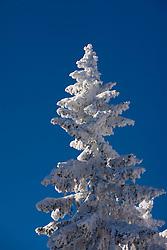 Three in snow, on December 20, 2009, in Rogla, Slovenia. (Photo by Vid Ponikvar / Sportida)