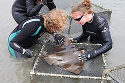 Stephanie & Katie Working On Bat Ray