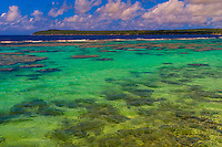 Coral reef, Roh Seday Home Stay, North Bay, island of Mare, Loyalty Islands, New Caledonia