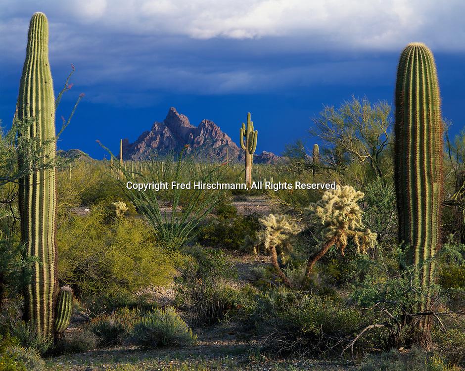 Saguaros framing North Ajo Peak with departing storm, Cabeza Prieta National Wildlife Refuge, Arizona.
