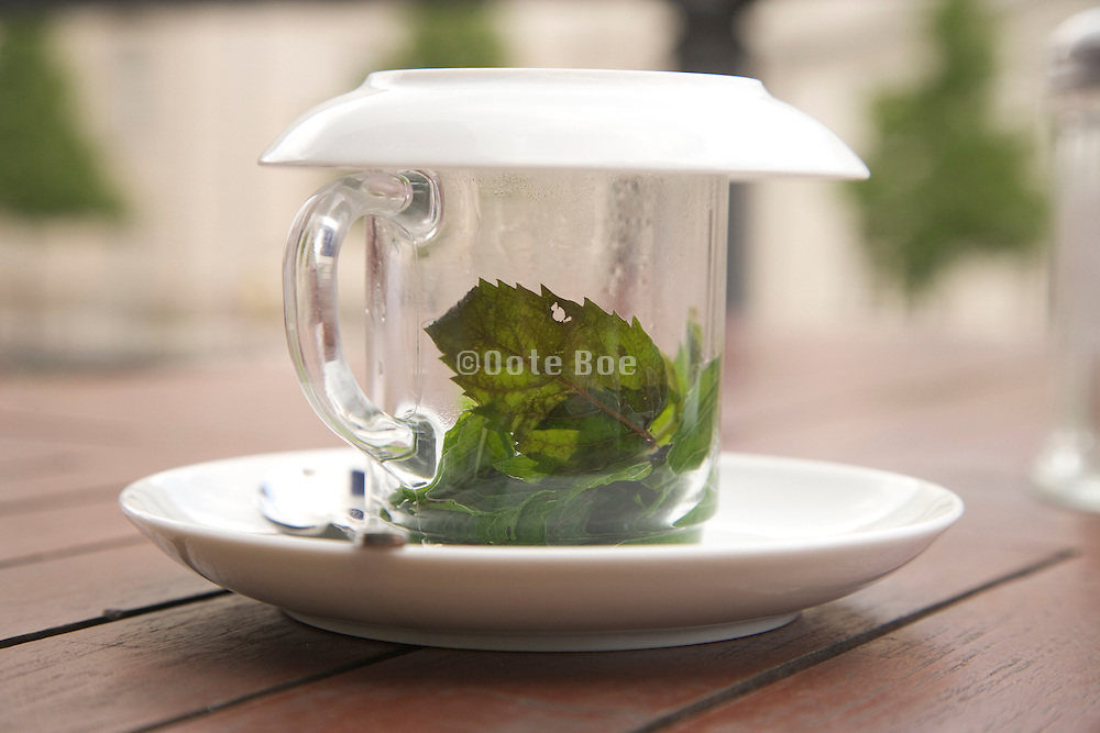 fresh mint in teacup covered with a saucer