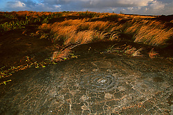 Circles and dots, the oldest petroglyphs, which may be the depository of the piko or navel cord of a baby for worshipping Pu`uloa or long life, Pu`u Loa, Puu Loa, Pu`uloa or Puuloa Petroglyph Trail, Hawaii, USA Volcanoes National Park, Kilauea, Big Island, Hawaii, USA