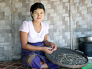 An Intha woman preparing small fish collected from the Bilu river in an Intha ethnic minority village in Kayah State, Myanmar on 15th November 2016