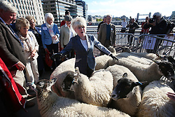 © Licensed to London News Pictures. 27/09/2015. London, UK. Barbara Windsor is jostled by the flock as she exercises her right as a Freeman of the City of London to drive sheep across London Bridge. Photo credit: Peter Macdiarmid/LNP