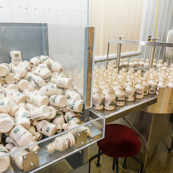 Quart-sized bottles are fed into the bottling conveyer at Maine Maple Products in Madison, Maine. The majority of the syrup bottled here is harvested in Big Six Township, Maine.
