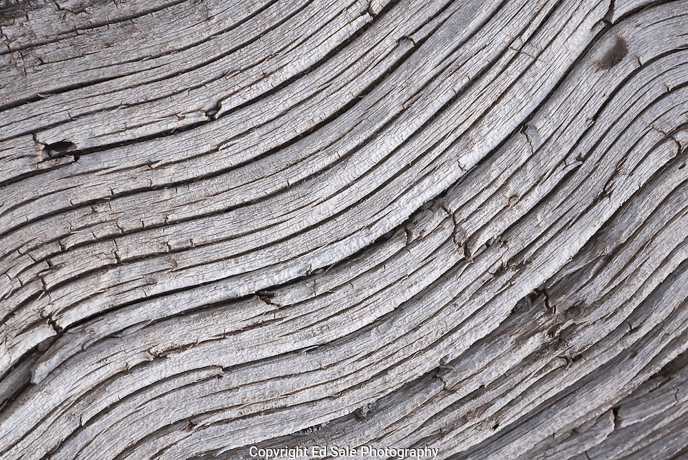 Flowing lines in a dead log in the Craters of the Moon National Monument.