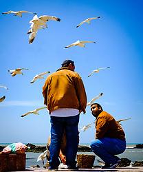 Fishermen in Essaouira, Morocco<br /> <br /> (c) Andrew Wilson | Edinburgh Elite media
