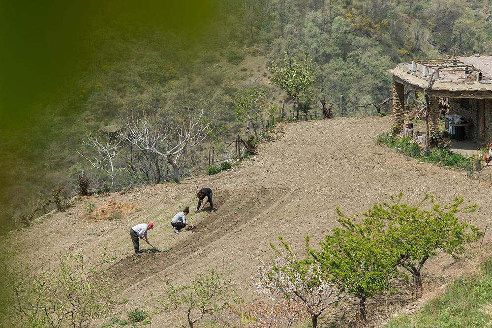 Farmers in field in Pampaneira, Spain