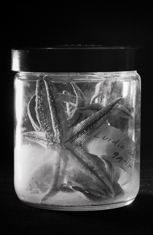 Star fish in a jar, part of the reptile collection at the Tulane Natural History Museum.