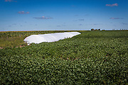 2015/03/04 – Monte Maiz, Argentina: A silo bag on a soy field in the region of Monte Maiz. Silo bags are more economic to storage previous harvests. Each silo can hold from 100 to 200 tones of soy depending on their size. Large scale producers tend to hold on their harvests until the price of soy reachs a satisfiying price, meanwhile small producers can't hold to them and have to sell it immediately to cover the costs of production. (Eduardo Leal)