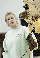Wurtsboro, New York  - Ellen Kalish of the Ravensbeard Wildlife Rehabilitation Center holds a red-tailed hawk (Buteo jamaicensis) during a live bird demonstration at the Wurtsboro Winterfest on Feb. 11, 2012. The program was presented by the Basha Kill Area Association. ©Tom Bushey / The Image Works