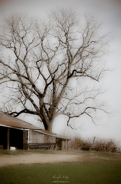 Winter approaches, the remnants of a farm have seen better days and the old oak seldom tells the stories.