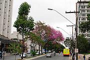 Belo Horizonte_MG, Brasil...Avenida do Contorno no bairro Savassi em Belo Horizonte, Minas Gerais...Contorno avenue in Savassi neighborhood in Belo Horizonte, Minas Gerais...Foto: JOAO MARCOS ROSA / NITRO