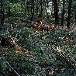 Sidney, ME. Selective Logging. Green Certification. Slash is used to lower impact on the soil at this Smartwood site in Maine.