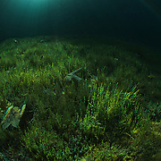 Divespot: Samarangersee Fresh water scuba diving at Samarangersee, Austria. Incredible visibility, crystal clear water and mystic illumination. Spectacular underwater landscape.