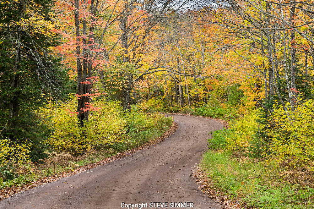 The Superior National Forest has a perfect mix of hardwood trees to create a multi-colored fall treat. Near the Caribou Trail, Lutsen MN