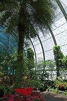 Singapore's Changi Airport Butterfly Garden is designed to be a tropical nature retreat for passengers of Changi Airport Terminal 3's to have a quick rest.  It is home to more than 1,000 free flying singapore butterflies, and close to 50 butterfly species native to Singapore and Malaysia were specifically selected to be bred in the butterfly garden.  The two-storey open-air enclosed garden is protected by a curved-shaped roof made out of high quality stainless steel mesh and unique glass windows, facing Changi Airport's large airfield. It was designed in this manner to keep the butterflies in, maintaining exchange of wind and natural air which is vital to the survival of butterflies.