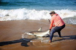 South Africa - Durban - 21 June 2020 - Nico Naidoo catch Shark along  spearfishing among the shoals of sardines were sighted near Pennington beach, Scottburgh, KwaZulu-Natal, on Sunday, June. They were surrounded by dolphins, sharks and gannets that were pursuing the sardines.<br /> Picture: Motshwari Mofokeng/African News Agency (ANA)