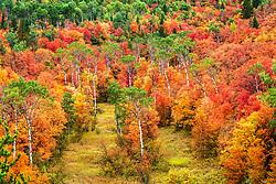 Glowing autumn in Swan Valley Idaho.