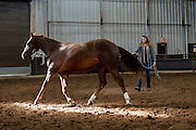 A competitor warms up her horse in the morning before the start of the National Reigning Horse championships in Oklahoma City.