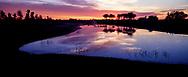 Sunrise at a pond in Sarasota, FL