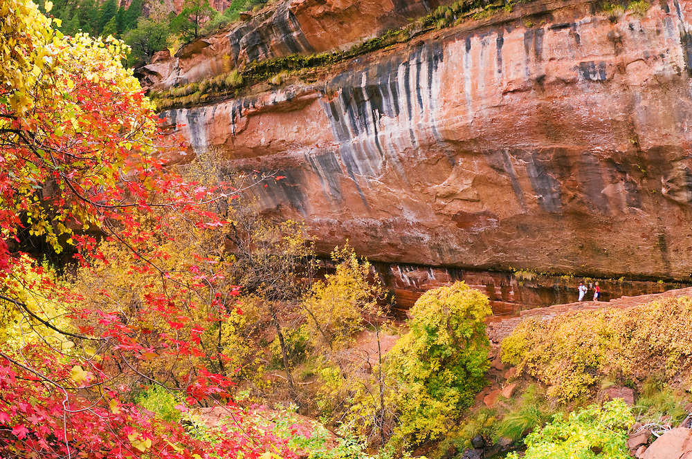 Fall color and cascade at the lower Emerald Pools (hikers visible), Zion National Park, Utah