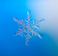 Snowflake photographed through a microscope.