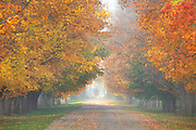 Fall colors adorn the maple trees at the historic Daly Mansion in Hamilton, Montana,