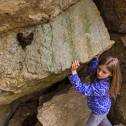 A girl finds an old swallow's nest on the underside of a large glacial erratic in the Stonehouse Forest in Barrington, New Hampshire.