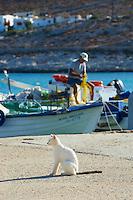 Grece, Cyclades, ile de Folegandros, le port de Karavostasis // Greece, Cyclades islands, Folegandros, Karavostasis port