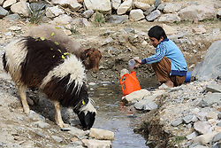 Iqbal 7 years old collects drinking water for the family use from an unprotected source where sheep and other animals also come to drink, Kharbed Village, Shahrestan, Daikundi Province, Afghanistan