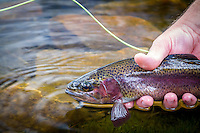 Releasing a beautifully colored rainbow trout back into the cool waters of a high elevation lake in the Uinta Mountains of Utah.