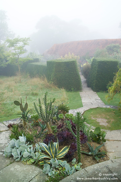 Misty summer morning at Great Dixter with cacti and succulents planted outside for the summer in a bed on the circular steps. Exotic garden beyond