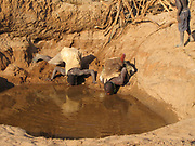 Hadza men drinking water from a muddy almost dry waterhole. Hadza are a small tribe of hunter gatherers AKA Hadzabe Tribe. Photographed at Lake Eyasi, Tanzania