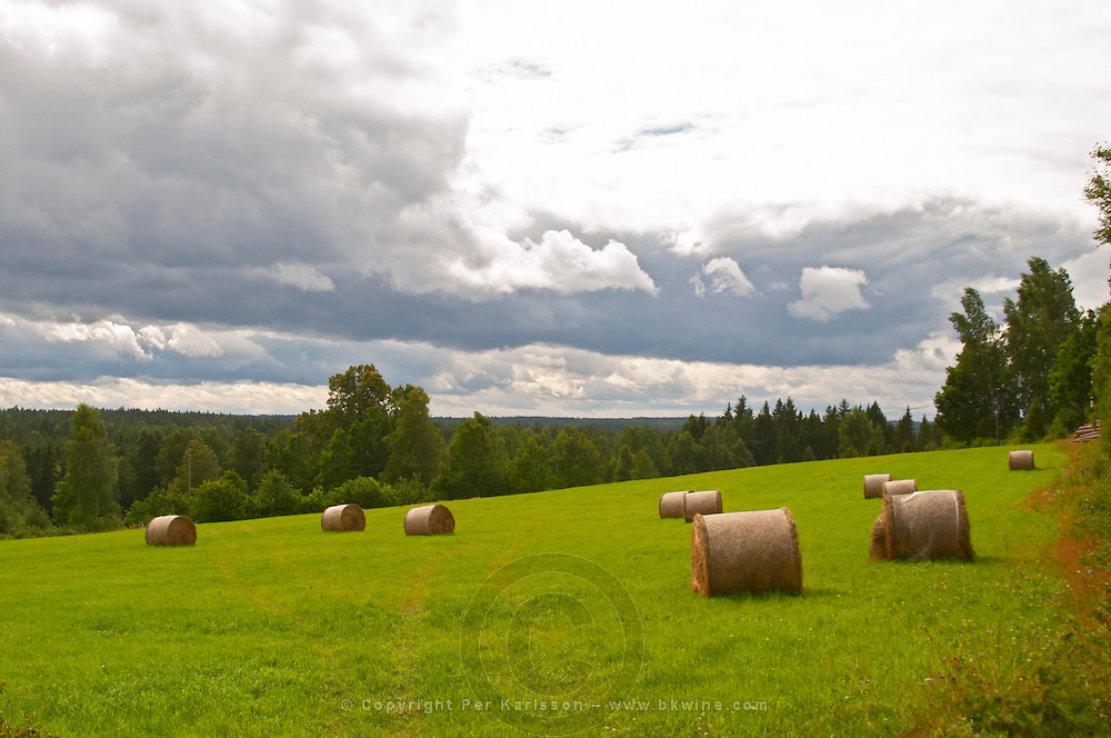 Cut field with hay bales in evening light. Smaland region. Sweden, Europe.