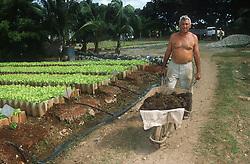 Man pushing wheelbarrow working on the Rotonda de Cojimar organic allotment in Havana; Cuba,