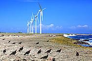Windmills and vultures Caletones, Holguin, Cuba.
