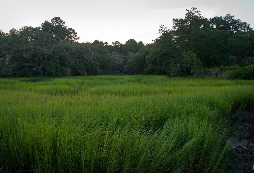7772 Green Marsh