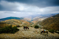 Tethered donkeys grazing in the High Atlas Mountains, Morocco, North Africa<br /> <br /> (c) Andrew Wilson | Edinburgh Elite media
