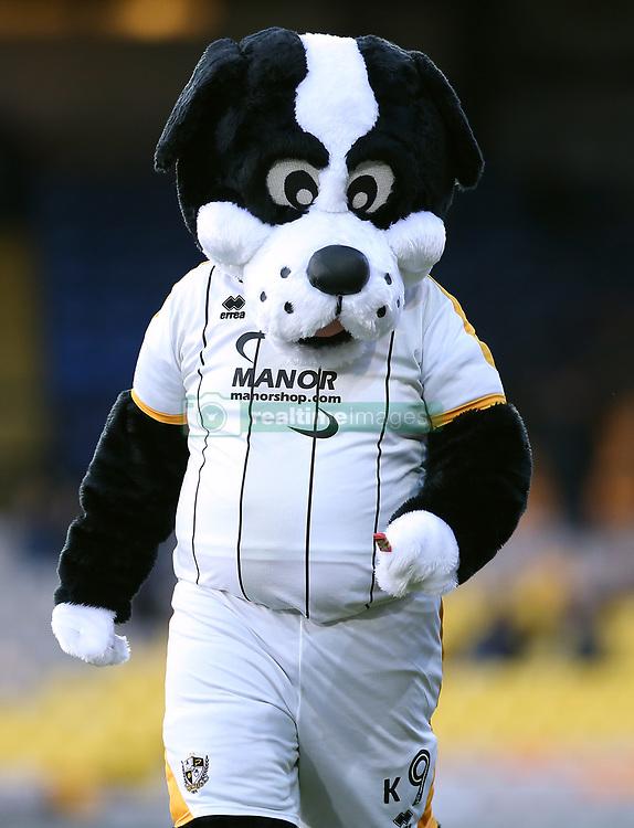 Port Vale Mascot Boomer the Dog