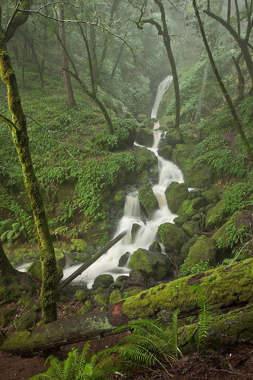 """The misty woods on a hiking trail in Fairfax, California. It's a green """"hobbit like"""" land, full of lush moss and ferns."""