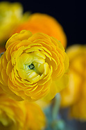 Botanicals by Color:  Yellow and White